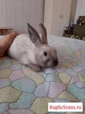 Продаю декоративного кролика Краснодар
