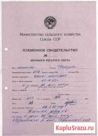 Племенное свидетельство крс Мин. сельхоз. СССР 198 Белгород