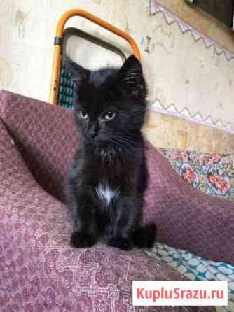 Котёнок Чита