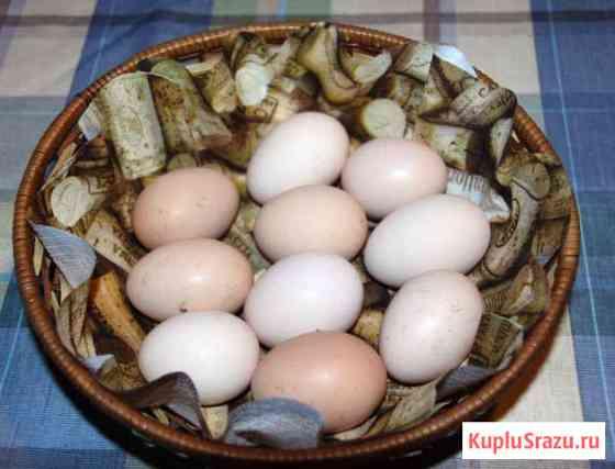 Яйцо куриное домашнее Дорохово