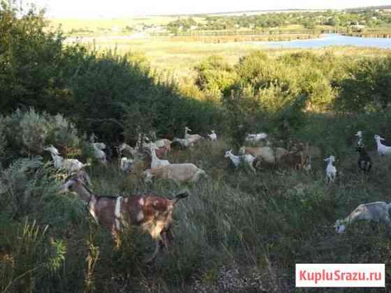 Готовый бизнес Козья ферма с сыроварней и домом Синявское