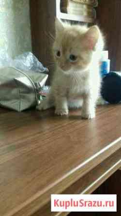 Отдам котенка Курган