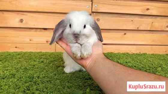 Карликовый крольчонок мальчик cuaмck Екатеринбург