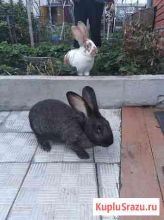 Кролики Челябинск