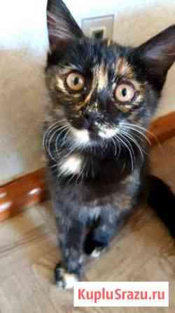 Котенок девочка Чита