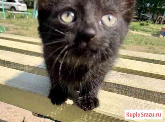 Отдам котёнка Муром