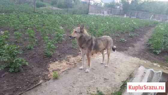 Продам щенков зсл Городище