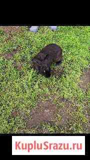 Кролик Пермь