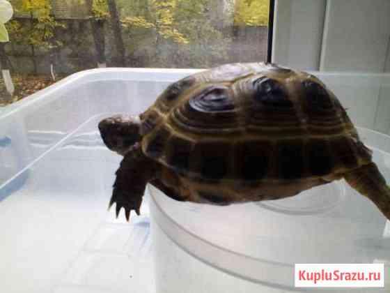 Черепаха Нижний Новгород