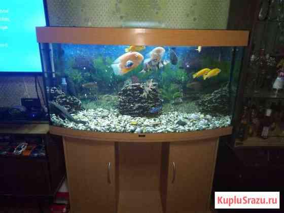 Продам аквариум Лесной