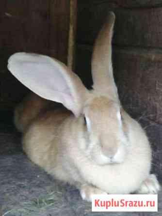 Кролики Кострома