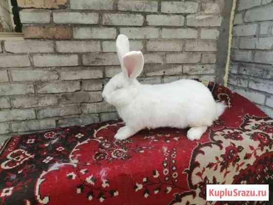Кролики на племя Пенза