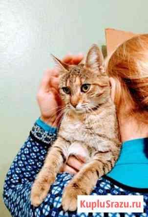 Кошка Череповец