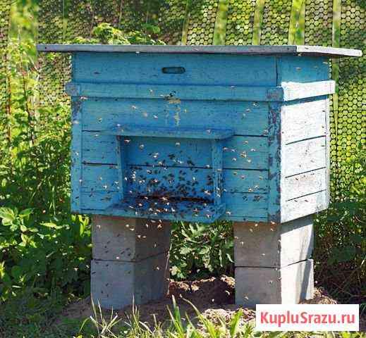 Пчёлосемьи Калининград