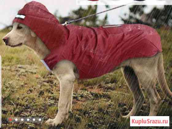 Одежда для собак Железнодорожный