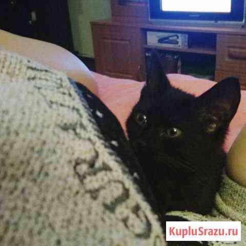 Отдам котёнка в хорошие руки Муром