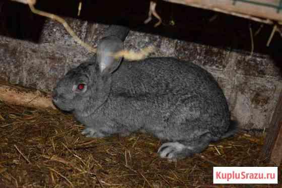 Кролик-самец, кролик-самка Набережные Челны
