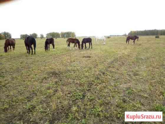 Лошади Введенское