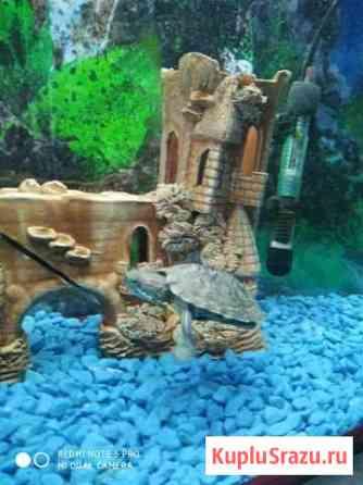 Черепаха красноухая, террариум,корм Астрахань