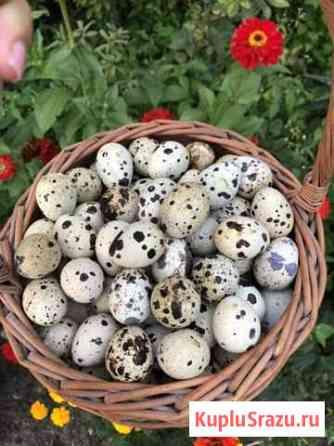 Перепелиное яйцо Янтарный