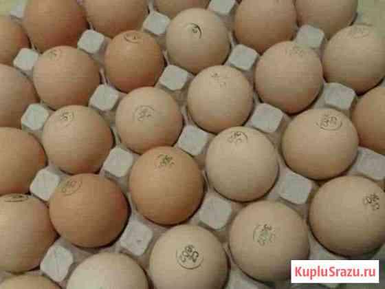 Инкубационное яйцо бройлера кобб500 и росс 308 Петрозаводск