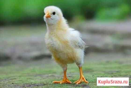 Работник птицефермы Новая Усмань
