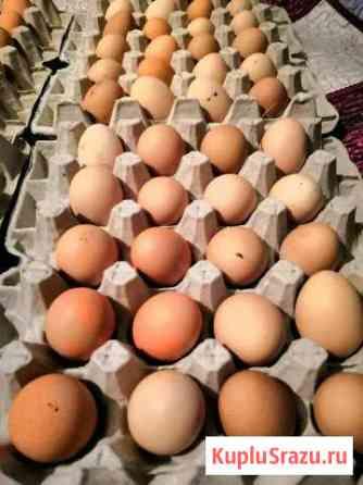 Яйцо деревенское куриное Биробиджан
