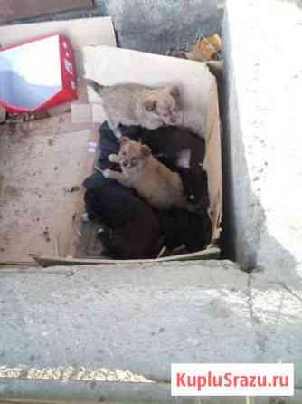 Щенки ищут дом Чита