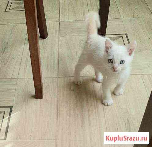 Отдам котенка в добрые руки Рыльск