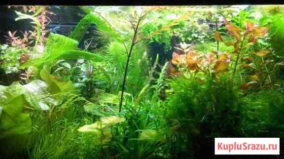 Аквариумные растения Калуга