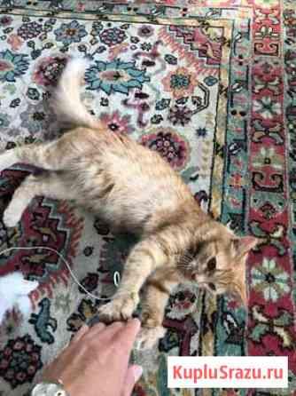Кошечка в добрые руки Домодедово