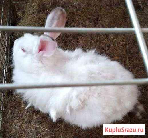 Кролик Петропавловск-Камчатский