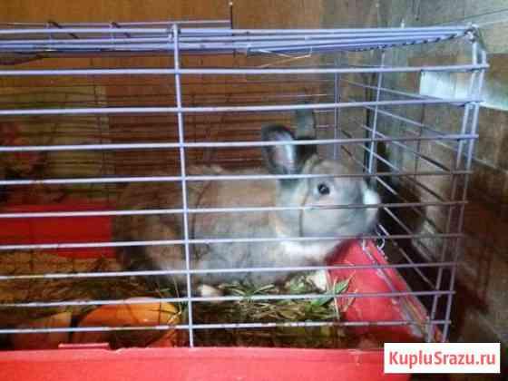 Кролик в добрые руки Софрино