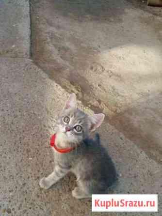 Кошечка ищет себе хозяина Астрахань