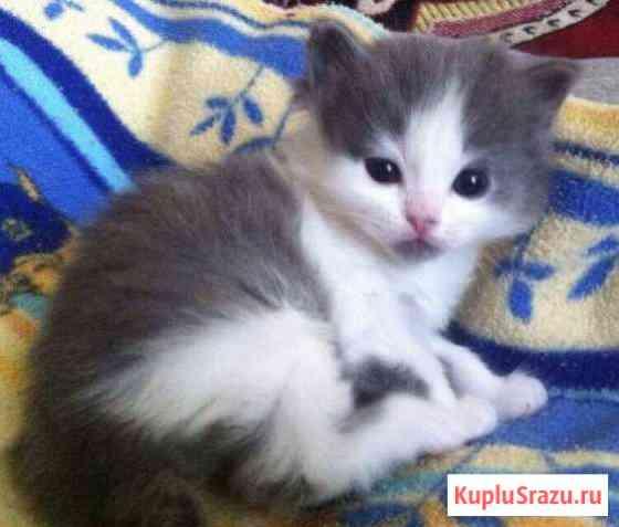 Отдам котят в хорошие руки Кирово-Чепецк