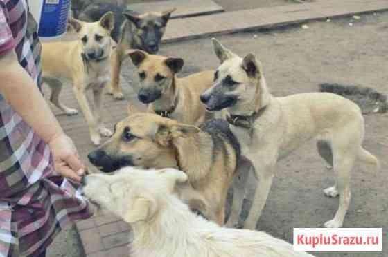 Большой выбор щенков-подростков в дар Железнодорожный