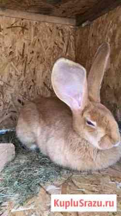 Шикарные Кролики Москва