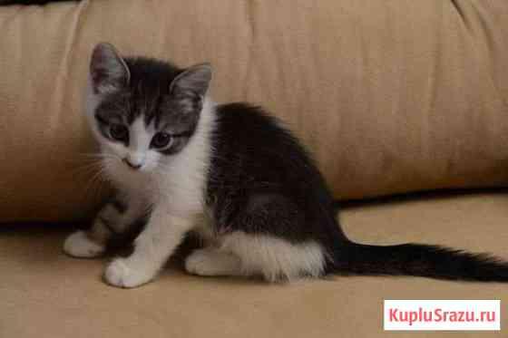 Котята ищут дом Калуга