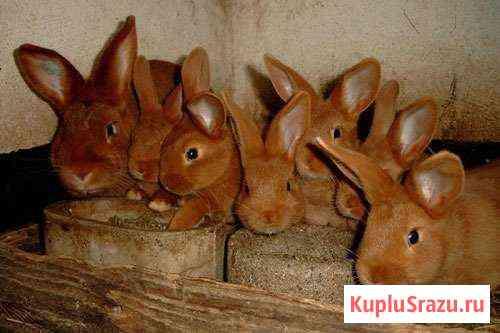 Кролики Рязань