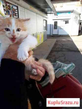Котята в добрые руки Биробиджан