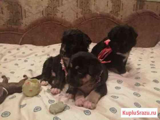 Милые щенки в добрые руки Домодедово
