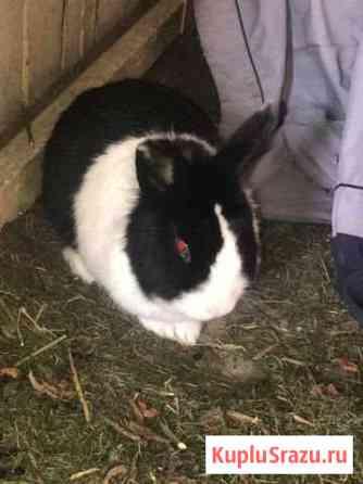 Отдам домашнего декоративного кролика Елизово
