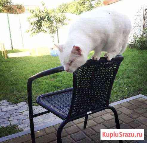 Отдам особенную кошку Калининград