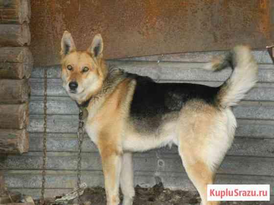 Отдам в добрые руки собаку Усть-Катав