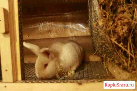 Кролики самцы и самки Набережные Челны