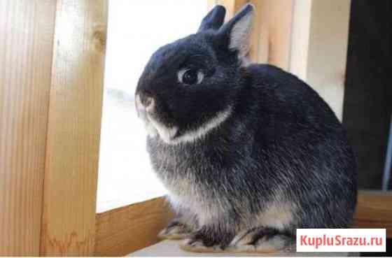 Карликовый кролик Москва