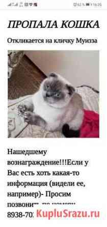 Пропала кошка Тырныауз
