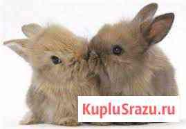 Декоративные кролики Москва
