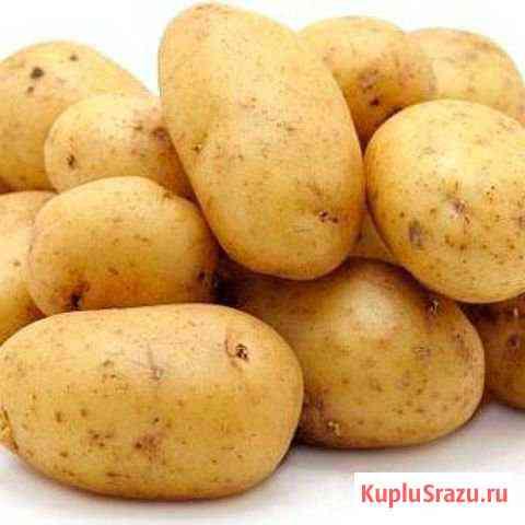 Картофель Ужур