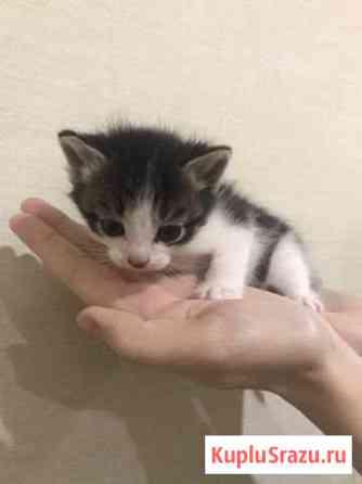 Котёнок (девочка) Киров